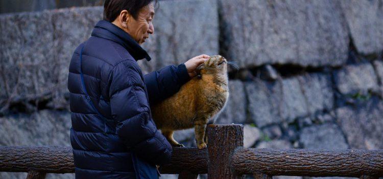 Eine Katze als tierischer Halt für Senioren